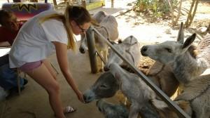 Donkeys3