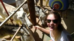 Donkeys4