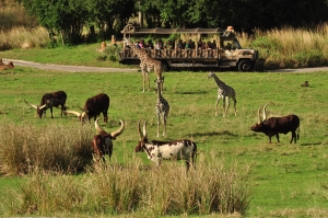 Wild Africa Trek 168